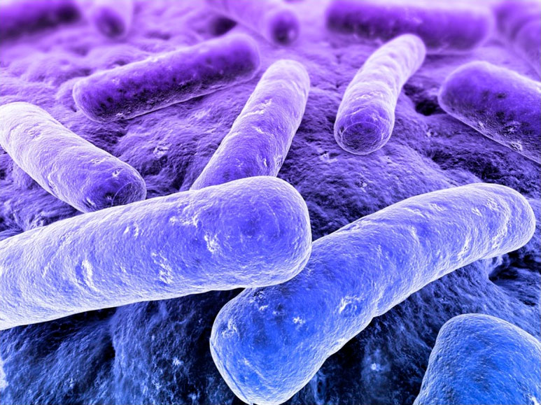 Gut bacteria image from the Proceedings of the National Academy of Sciences of the United States of America